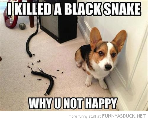 chewed guitar wire dog puppy animal killed black snake not happy funny pics pictures pic picture image photo images photos lol