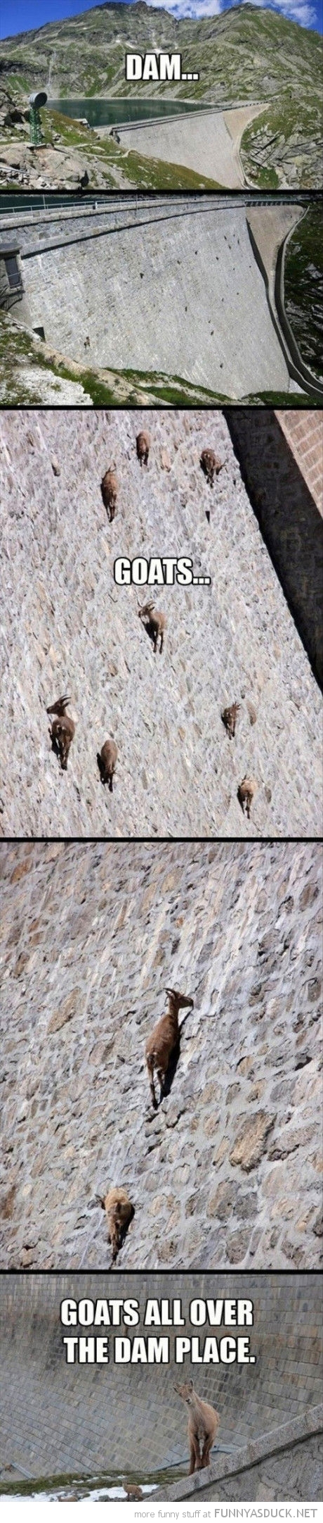 climbing coats animals water dam all over place funny pics pictures pic picture image photo images photos lol