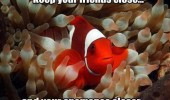 clown fish animal finding nemo keep friends close anemones closer funny pics pictures pic picture image photo images photos lol