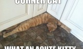 corner cat lolcat animal acute kitty funny pics pictures pic picture image photo images photos lol