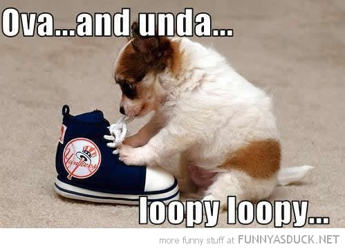cute puppy dog tying shoelaces animal over under loopy funny pics pictures pic picture image photo images photos lol