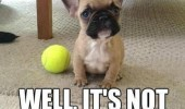 cute puppy dog animal pug bulldog ball not going to throw itself funny pics pictures pic picture image photo images photos lol
