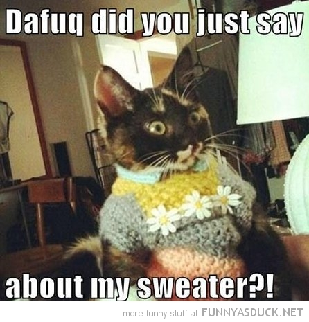dafuq did you just say about sweater jumper angry cat lolcat animal funny pics pictures pic picture image photo images photos lol