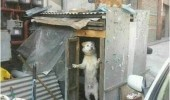 dog answering door hut shed animal can i help you sir funny pics pictures pic picture image photo images photos lol