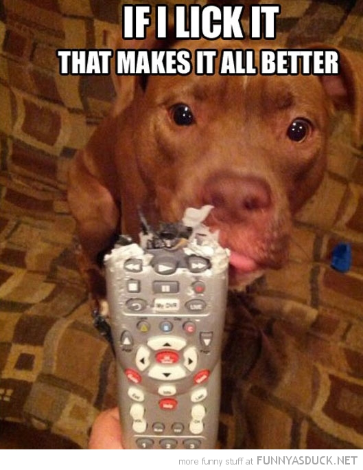 dog animal chew tv remote if lick it makes better funny pics pictures pic picture image photo images photos lol