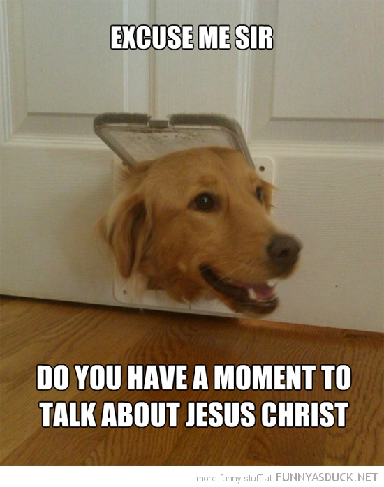 dog animal head cat flap excuse me moment talk jesus christ funny pics pictures pic picture image photo images photos lol