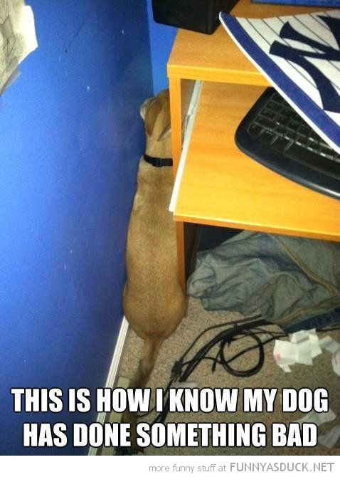 dog animal hiding corner how i know if done something wrong funny pics pictures pic picture image photo images photos lol