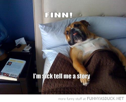 dog animal lying bed finn tell me story adventure time funny pics pictures pic picture image photo images photos lol