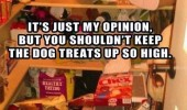dog pantry food cupboard shelf animal put treats so high funny pics pictures pic picture image photo images photos lol