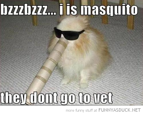 dog animal shades sun glasses toilet roll mosquitos don't go vet  funny pics pictures pic picture image photo images photos lol