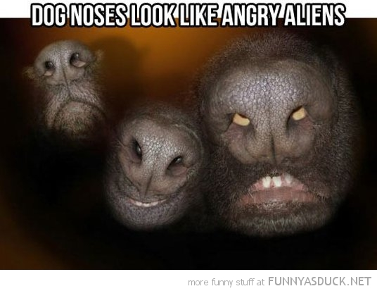 dog noses animals look like angry aliens funny pics pictures pic picture image photo images photos lol