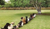 dogs animals queue tree stop coming park bathroom line funny pics pictures pic picture image photo images photos lol