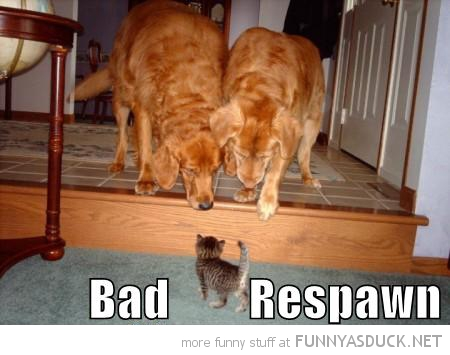 dogs animals staring kitten cat bad respawn gaming gamer fps funny pics pictures pic picture image photo images photos lol