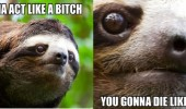 don't mess with sloths animal act like bitch die angry funny pics pictures pic picture image photo images photos lol