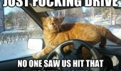 just drive cat animal lolcat no one saw us hit hooker right funny pics pictures pic picture image photo images photos lol