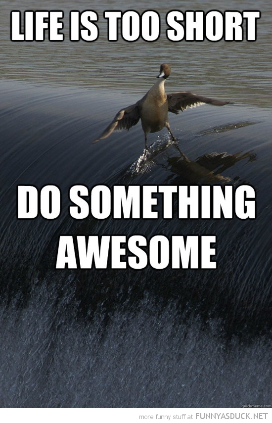 duck bird animal surfing water life is short do something awesome funny pics pictures pic picture image photo images photos lol