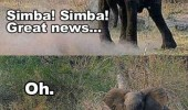 elephant animal simba great news lion sex see your busy funny pics pictures pic picture image photo images photos lol