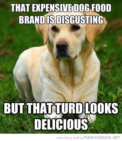 dog animal expensive food disgusting turd looks delicious  funny pics pictures pic picture image photo images photos lol