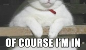 fat cat lolcat animal round is a shape funny pics pictures pic picture image photo images photos lol