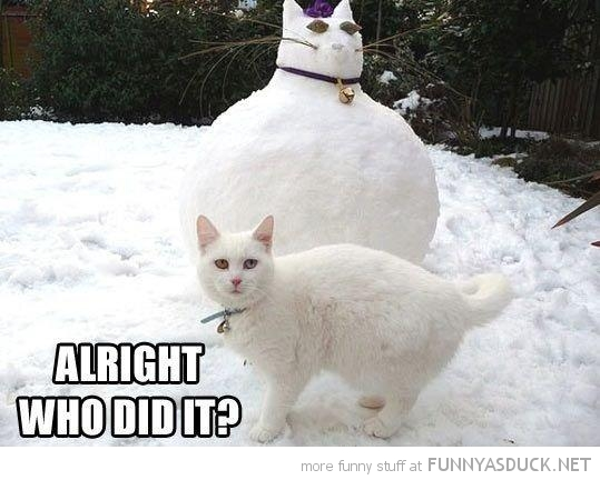 fat snow cat animal lolcat who did it funny pics pictures pic picture image photo images photos lol