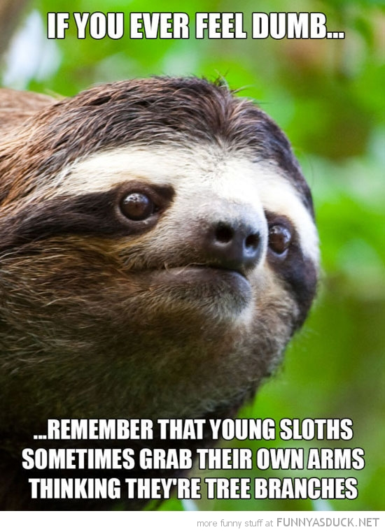 feel dumb remember young sloths grab arm thinking tree branch animal funny pics pictures pic picture image photo images photos lol