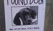 found dog animal poster he's staying we're bros funny pics pictures pic picture image photo images photos lol
