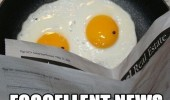 fried egg reading paper eggcellent news funny pics pictures pic picture image photo images photos lol