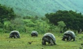 galapagos olympics turtles tortoise animals racing grass funny pics pictures pic picture image photo images photos lol