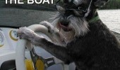 dog animal driving boat get in no time to explain funny pics pictures pic picture image photo images photos lol
