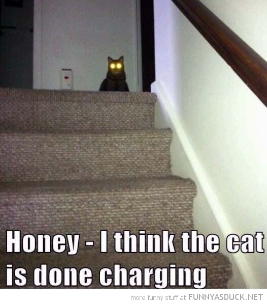 glowing eyes cat lolcat animal honey done charging funny pics pictures pic picture image photo images photos lol