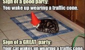 good great party cat lolcat animal cone on head funny pics pictures pic picture image photo images photos lol