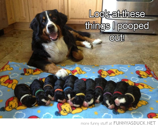 happy dog animal puppies look things pooped out funny pics pictures pic picture image photo images photos lol