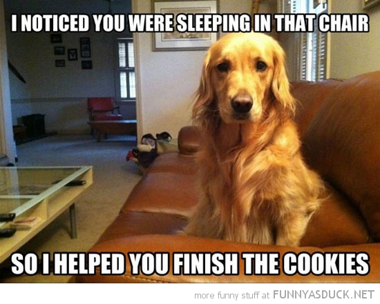 helpful dog animal noticed sleeping helped finish cookies funny pics pictures pic picture image photo images photos lol
