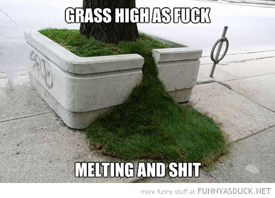 high grass melting tree funny pics pictures pic picture image photo images photos lol