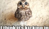 bird owl wide yes high stoned wasted kicking in funny pics pictures pic picture image photo images photos lol