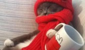 homeless cat lolcat animal hat scarf work for milk funny pics pictures pic picture image photo images photos lol