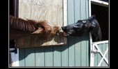 horses animals kissing stable relationship funny pics pictures pic picture image photo images photos lol