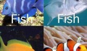 how see fish nemo animal clown funny pics pictures pic picture image photo images photos lol