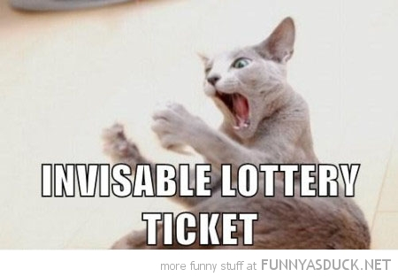 cat lolcat animal shocked invisible lottery ticket funny pics pictures pic picture image photo images photos lol