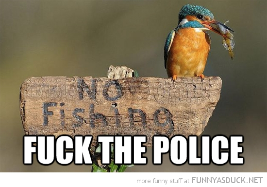 kingfisher bird animal sitting no fishing sign fuck the police funny pics pictures pic picture image photo images photos lol