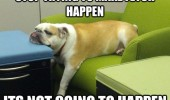 lazy dog animal head table stop trying to make fetch happen funny pics pictures pic picture image photo images photos lol