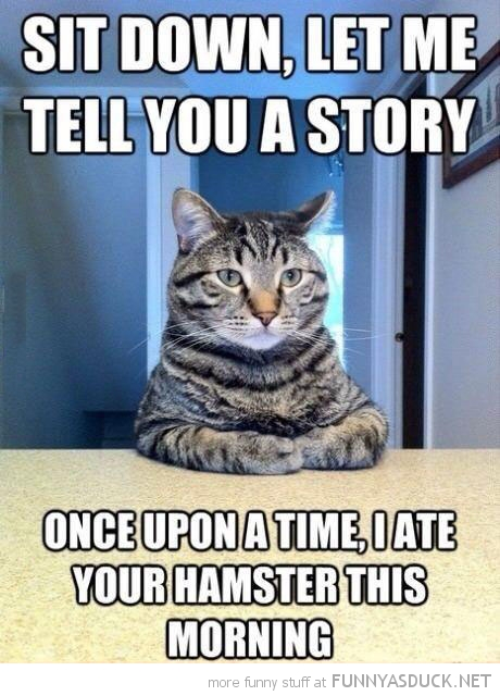 cat lolcat animal sitting tabble legs crossed let me tell story ate your hamster funny pics pictures pic picture image photo images photos lol