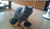 cat lolcat animal sex ernie toy not what you think funny pics pictures pic picture image photo images photos lol