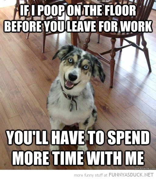 overly attached dog animal poop on floor before leave spend more time with me funny pics pictures pic picture image photo images photos lol