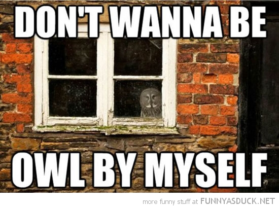 owl bird looking out window don't wanna be by myself pun funny pics pictures pic picture image photo images photos lol