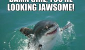 photogenic shark smiling animal damn girl looking jawsome pun water funny pics pictures pic picture image photo images photos lol