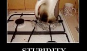 plastic kettle stove cooker hob burnt stupidity level funny pics pictures pic picture image photo images photos lol