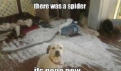 dog animal ripped bean bag mess there was spider gone now funny pics pictures pic picture image photo images photos lol