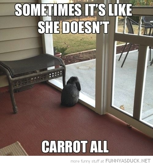 sad depressed bunny rabbit looking window sometimes like don't care carrot all pun joke funny pics pictures pic picture image photo images photos lol