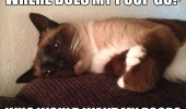 sad thinking cat lolcat animal where does my poop go funny pics pictures pic picture image photo images photos lol